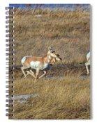 Sprinting Pronghorn Spiral Notebook