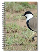 Spur-winged Lapwing Spiral Notebook