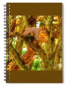 Squirrel Away Acorn Spiral Notebook