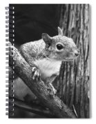 Squirrel Black And White Spiral Notebook