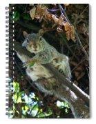 Squirrel By Nest Spiral Notebook