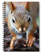 Squirrel Close-up Spiral Notebook
