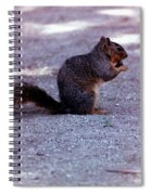 Squirrel Eating A Nut Spiral Notebook
