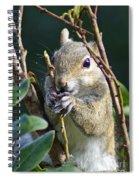 Squirrel Spiral Notebook