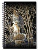 Squirrel On Birch Post Spiral Notebook