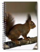 Squirrel Profile Spiral Notebook