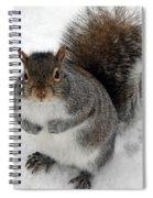 Squirrel Saying Feed Me Please At Niagara Falls Spiral Notebook