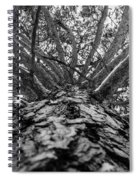 Squirrels View Looking Up Spiral Notebook