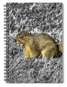 Squirrling Around Looking For Nuts Spiral Notebook