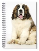 St Bernard Dog Spiral Notebook