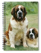 St Bernard With Puppy Spiral Notebook