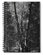 St-denis Woods 2 Spiral Notebook