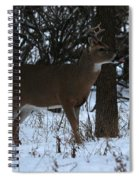 Stag In The Woods Spiral Notebook