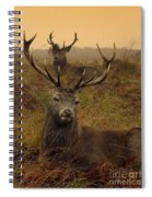 Williams Fine Art Stag Party The Series  Spiral Notebook