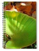 Staghorn Fern Butt Spiral Notebook