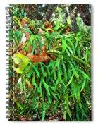 Staghorn Fresco Spiral Notebook