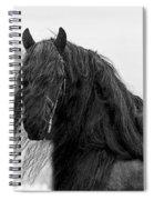 Stallion Beauty Spiral Notebook