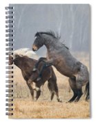 Stallion Challenge Spiral Notebook