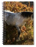 Stallion Of The Badlands Spiral Notebook