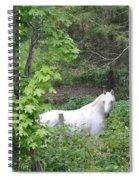 Stallion On Independence Day Spiral Notebook
