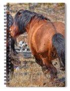 Stallions Gone Crazy Spiral Notebook
