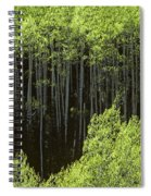 Stand Of Birch Trees New Growth Spring Rich Green Leaves Spiral Notebook