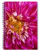 Standard Beautiful Dahlia Spiral Notebook