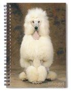 Standard Poodle Dog Spiral Notebook