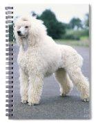 Standard Poodle Dog, Unclipped Spiral Notebook