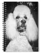 Standard Poodle Spiral Notebook