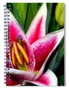Star Gazer Lily Spiral Notebook