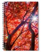 Star Light Thru Maple Spiral Notebook