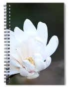 Star Magnolia Bloom Spiral Notebook