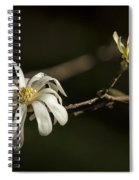 Star Magnolia Blossoms Spiral Notebook