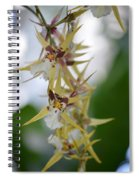 Star Orchids Spiral Notebook