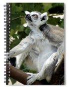 Lemur Stare Spiral Notebook