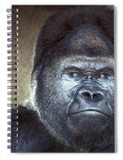 Stare-down - Gorilla Style Spiral Notebook