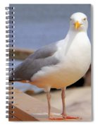 Stare Of A Seagull Spiral Notebook