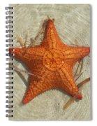 Starfish 1 Of Bottom Harbour Sound Spiral Notebook