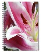 Stargazer Lily Flowers Closeup Spiral Notebook