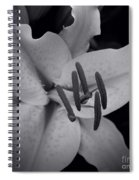 Stargazer Spiral Notebook