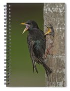 Starling And Young Spiral Notebook