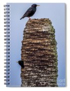 Starlings 2 Spiral Notebook