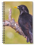 Starlings Spiral Notebook