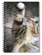 Starry Night Kitty Style - Featured  In Comfortable Art Group Spiral Notebook