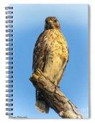 Stately Red-shouldered Hawk Spiral Notebook