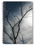 Steal Trees Spiral Notebook