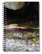Steelhead Resting In The Shallows Spiral Notebook