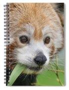 Stella Contemplates Spiral Notebook