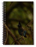 Steller Jay Spiral Notebook